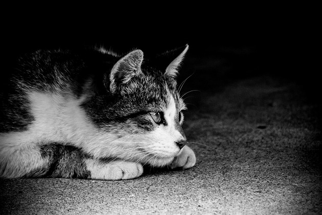 罠と聞いて身構える猫