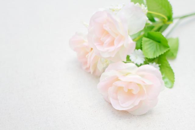 白い3輪のバラ