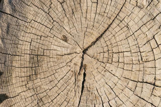 乾燥して割れた木の断面