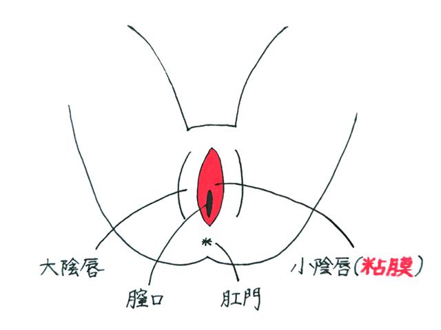 Iラインの粘膜部分の範囲はここ