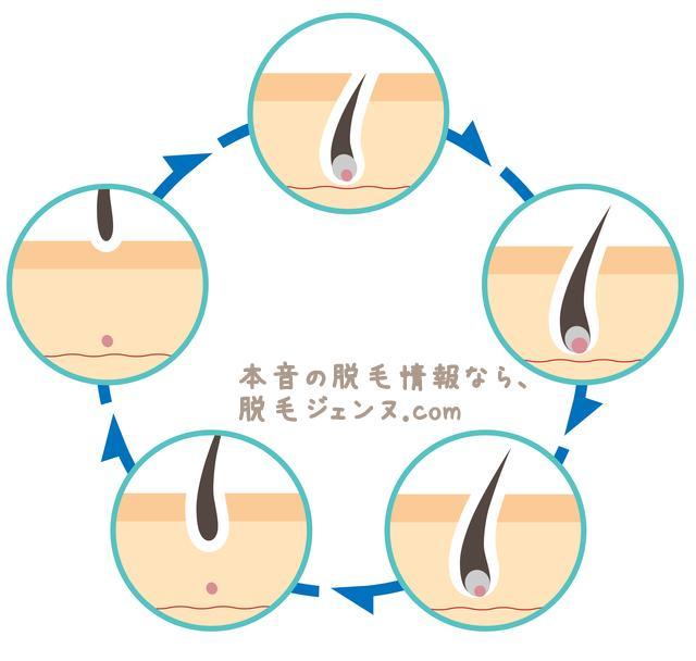 あなたは脱毛の基本や毛周期のサイクルを知っていますか?